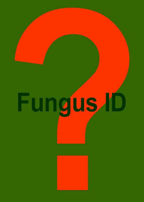 IdentifyMaryland Fungi